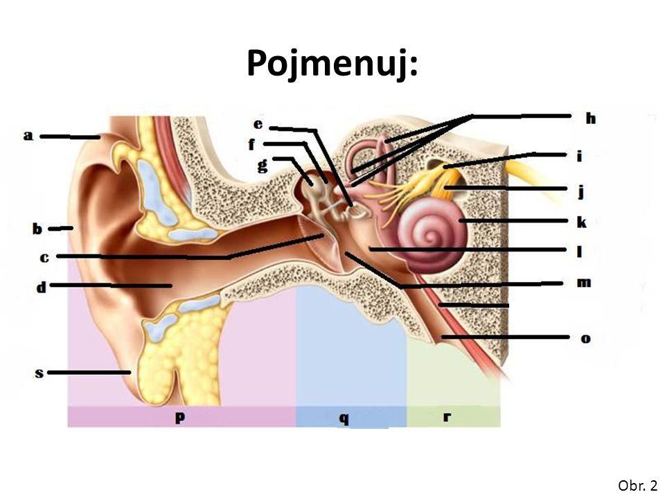 řešení: a)ušní závit b)boltec c)bubínek membrana tympanica d)zevní zvukovod e)třmínek f)kovadlinka g)kladívko h)polokruhovité chodby i)nerv rovnovážný (n.