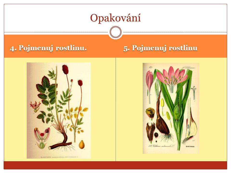 4. Pojmenuj rostlinu. 5. Pojmenuj rostlinu Opakování