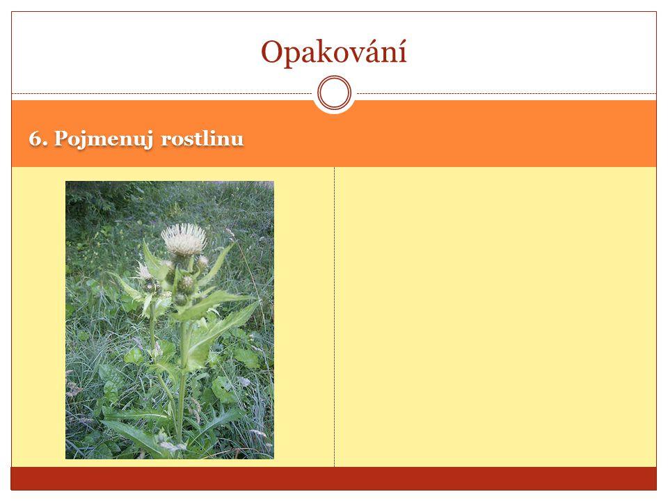 6. Pojmenuj rostlinu Opakování