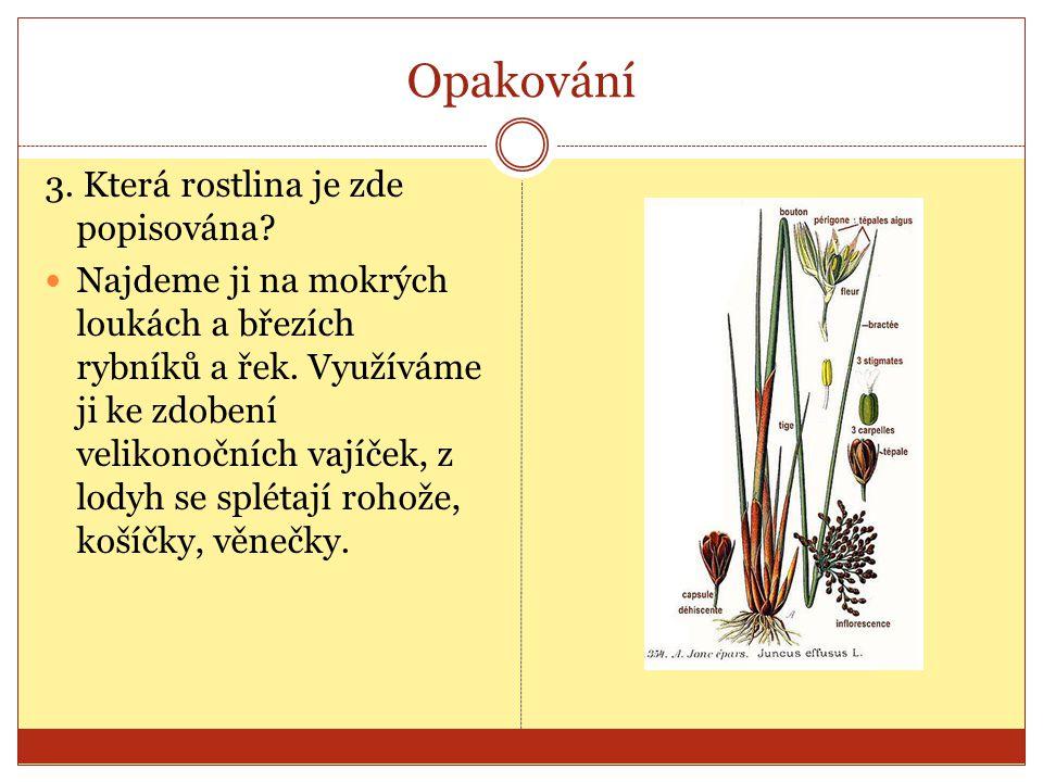 Opakování 3. Která rostlina je zde popisována? Najdeme ji na mokrých loukách a březích rybníků a řek. Využíváme ji ke zdobení velikonočních vajíček, z