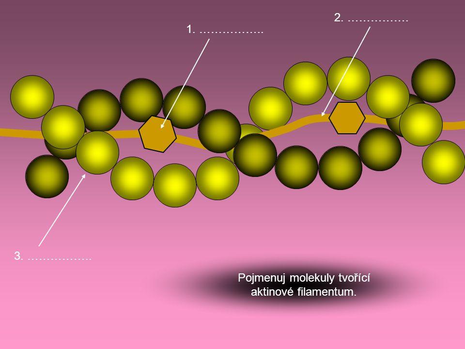 3. …………….. 2. ……………. 1. …………….. Pojmenuj molekuly tvořící aktinové filamentum.