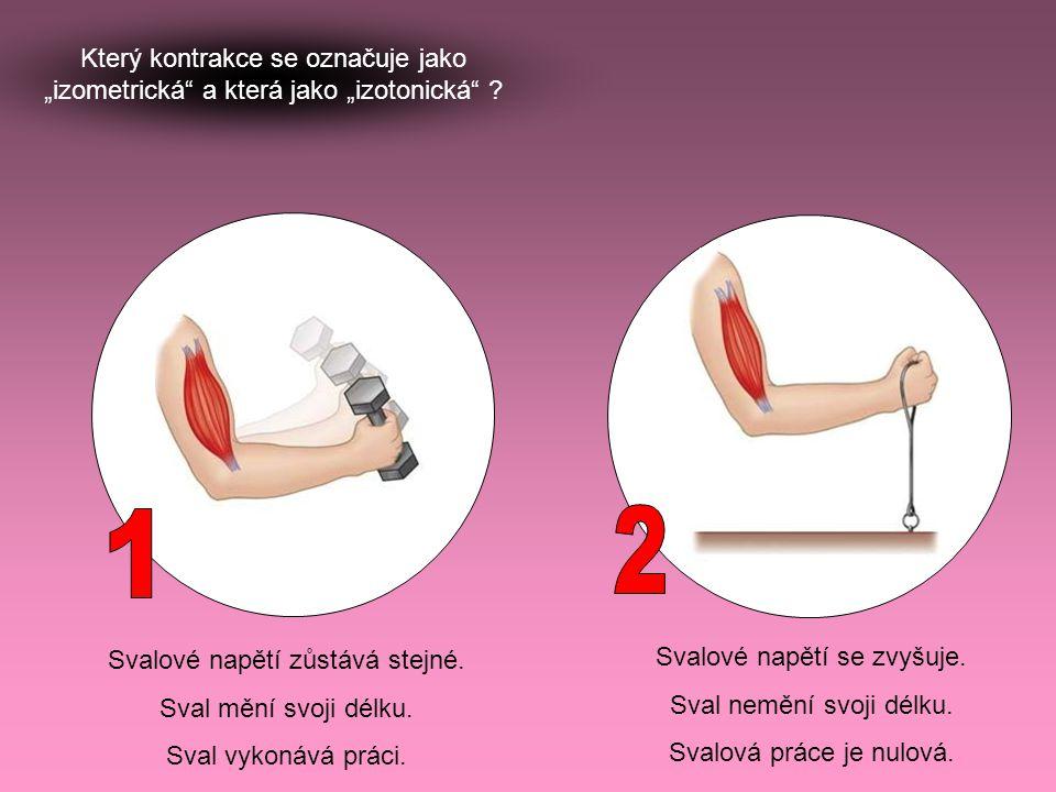 """Který kontrakce se označuje jako """"izometrická"""" a která jako """"izotonická"""" ? Svalové napětí zůstává stejné. Sval mění svoji délku. Sval vykonává práci."""