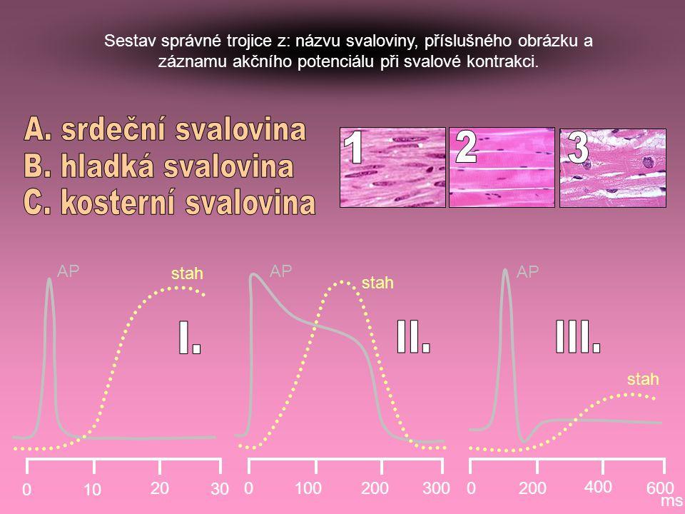 010 20 30 01002003000200 400 600 ms AP stah Sestav správné trojice z: názvu svaloviny, příslušného obrázku a záznamu akčního potenciálu při svalové ko