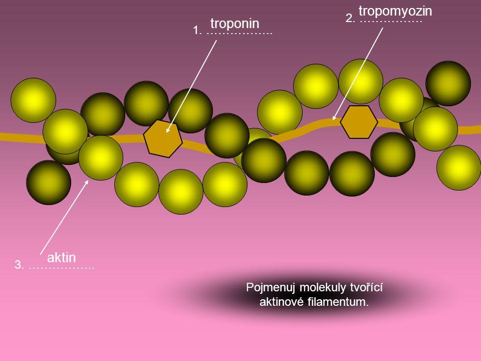 3. …………….. 2. ……………. 1. …………….. Pojmenuj molekuly tvořící aktinové filamentum. troponin tropomyozin aktin