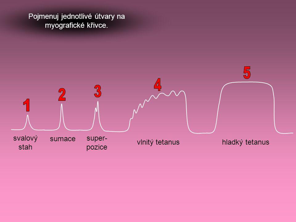 svalový stah sumace super- pozice vlnitý tetanushladký tetanus Pojmenuj jednotlivé útvary na myografické křivce.