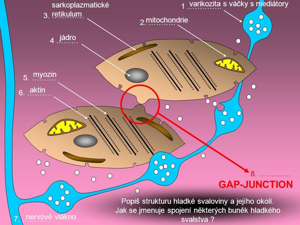 1 ………….. 4 ……… 3. …………. 2. ……….. 6. ………. 5. ………. 7. ………… 8. …………. varikozita s váčky s mediátory jádro sarkoplazmatické retikulum mitochondrie aktin m