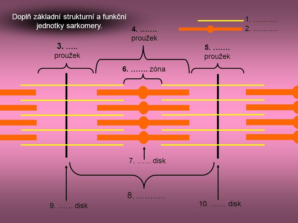 010 20 30 01002003000200 400 600 ms AP stah Sestav správné trojice z: názvu svaloviny, příslušného obrázku a záznamu akčního potenciálu při svalové kontrakci.