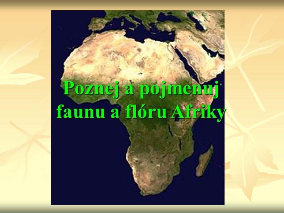 Poznej a pojmenuj faunu a flóru Afriky