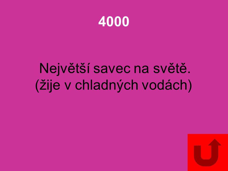 4000 Největší savec na světě. (žije v chladných vodách)