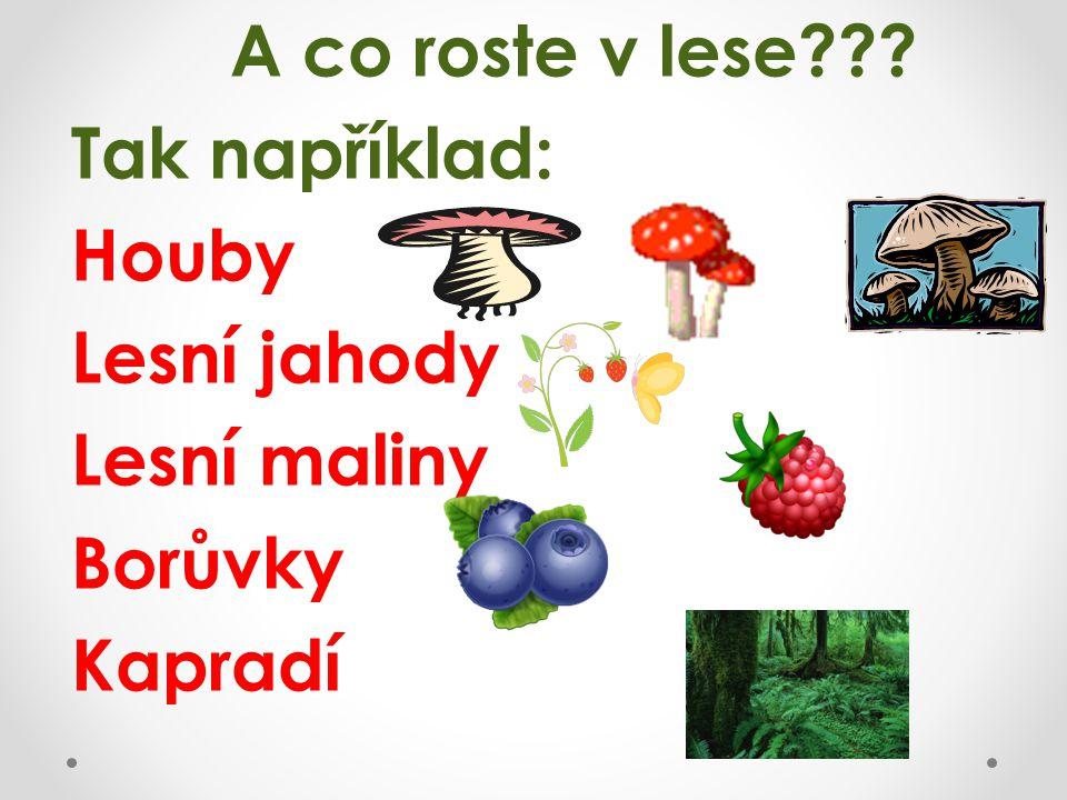 Tak například: Houby Lesní jahody Lesní maliny Borůvky Kapradí
