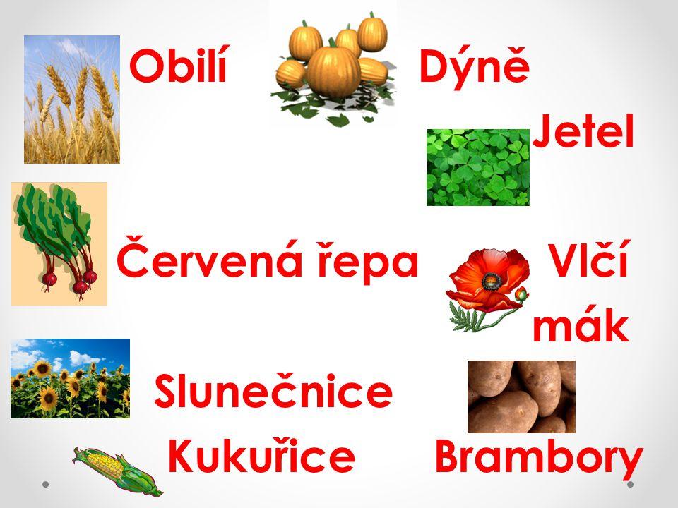 Obilí Dýně Jetel Červená řepa Vlčí mák Slunečnice Kukuřice Brambory