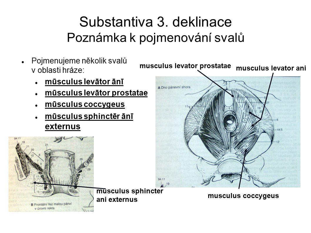 Substantiva 3.