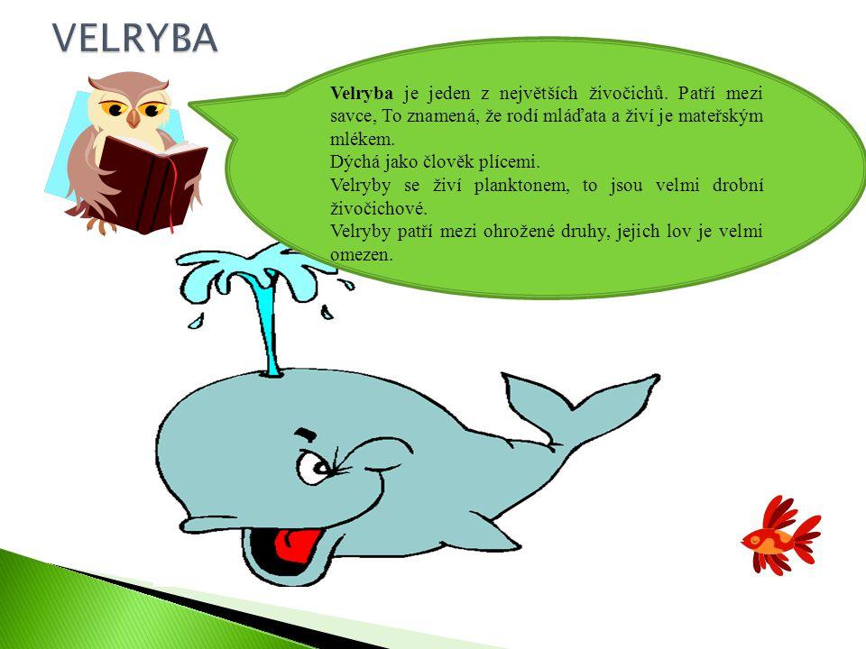 (5) Velryba je jeden z největších živočichů.