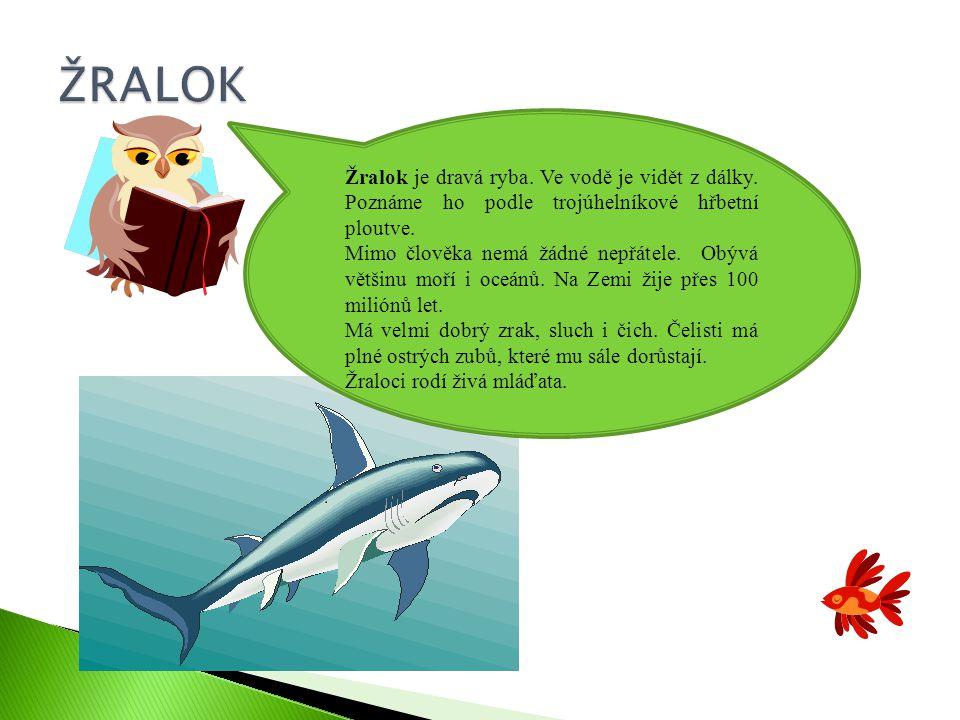 Žralok je dravá ryba.Ve vodě je vidět z dálky. Poznáme ho podle trojúhelníkové hřbetní ploutve.