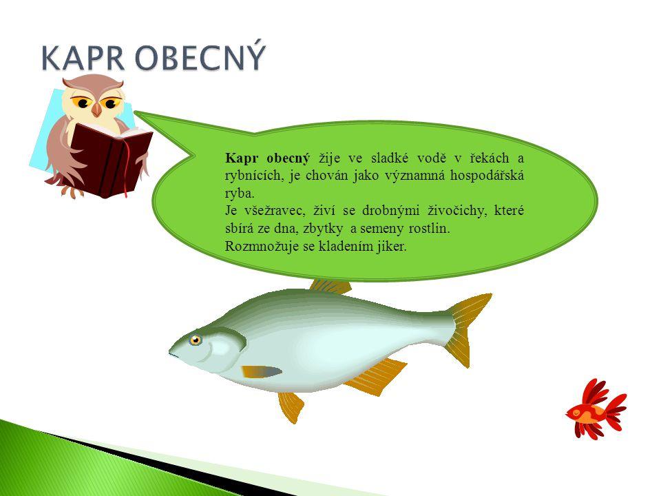 Kapr obecný žije ve sladké vodě v řekách a rybnících, je chován jako významná hospodářská ryba.