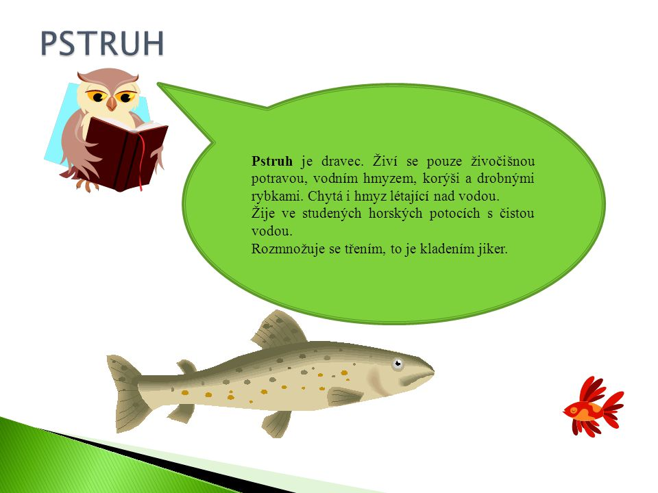 Pstruh je dravec.Živí se pouze živočišnou potravou, vodním hmyzem, korýši a drobnými rybkami.