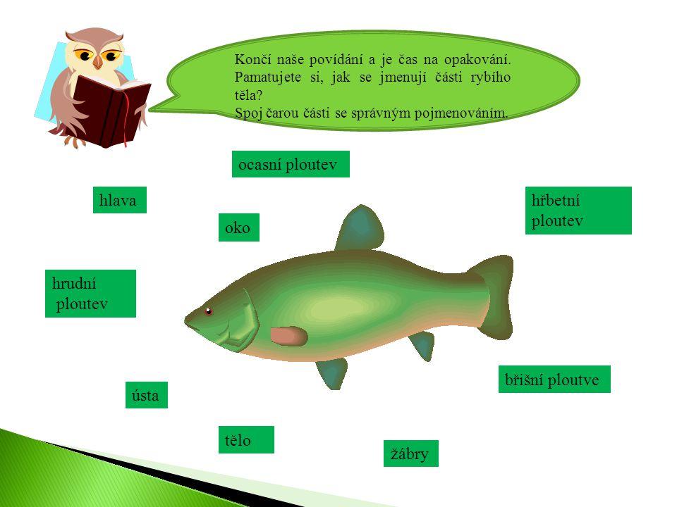 Končí naše povídání a je čas na opakování.Pamatujete si, jak se jmenují části rybího těla.