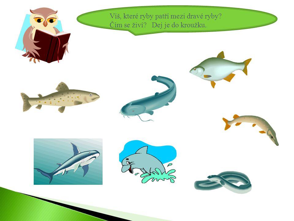 Víš, které ryby patří mezi dravé ryby? Čím se živí? Dej je do kroužku.