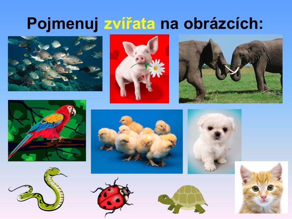 Pojmenuj zvířata na obrázcích: