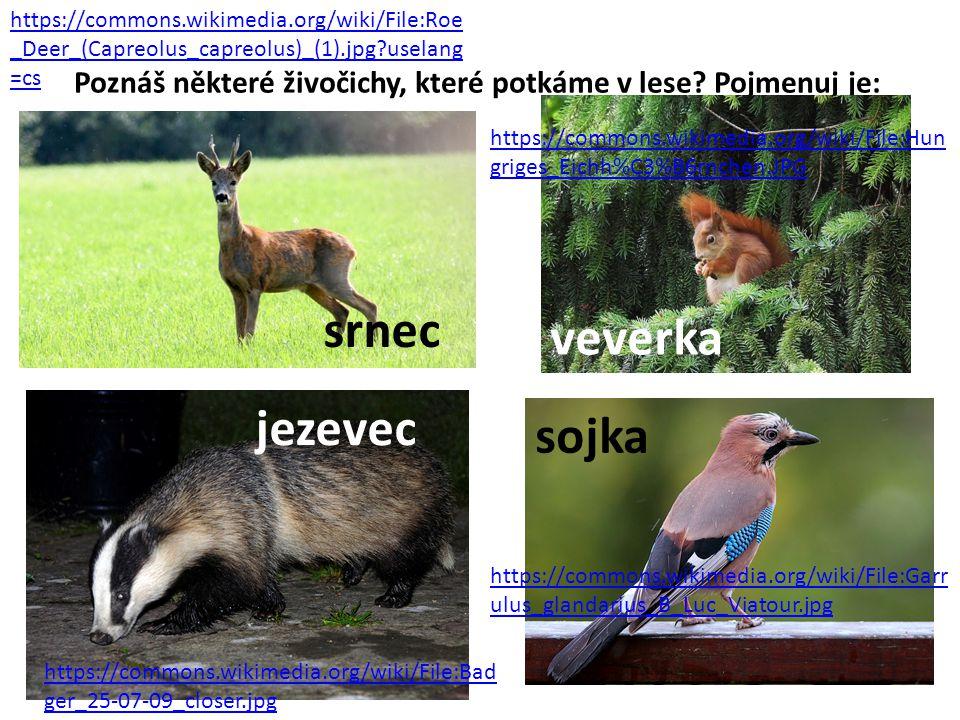 Poznáš některé živočichy, které potkáme v lese? Pojmenuj je: https://commons.wikimedia.org/wiki/File:Roe _Deer_(Capreolus_capreolus)_(1).jpg?uselang =