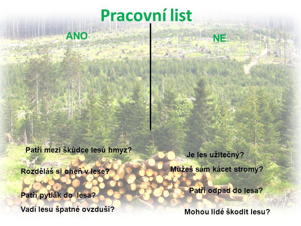 ANO NE Pracovní list Je les užitečný? Patří mezi škůdce lesů hmyz? Mohou lidé škodit lesu? Rozděláš si oheň v lese? Můžeš sám kácet stromy? Vadí lesu