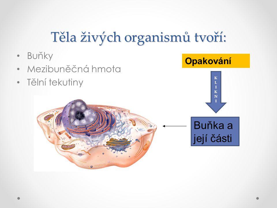 Buňky Mezibuněčná hmota Tělní tekutiny Těla živých organismů tvoří: Buňka a její části Opakování KLIKNIKLIKNI