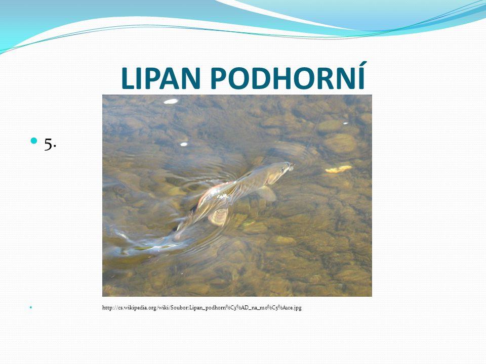 LIPAN PODHORNÍ 5. http://cs.wikipedia.org/wiki/Soubor:Lipan_podhorn%C3%AD_na_mo%C5%A1ce.jpg