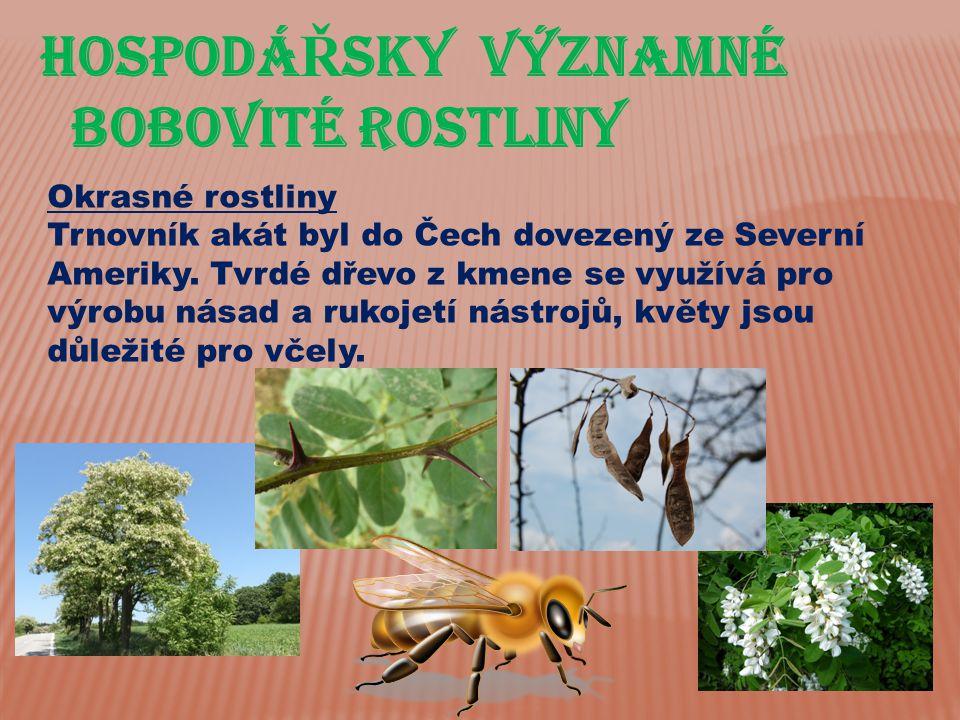 Hospodá Ř sky významné bobovité rostliny Okrasné rostliny Trnovník akát byl do Čech dovezený ze Severní Ameriky. Tvrdé dřevo z kmene se využívá pro vý
