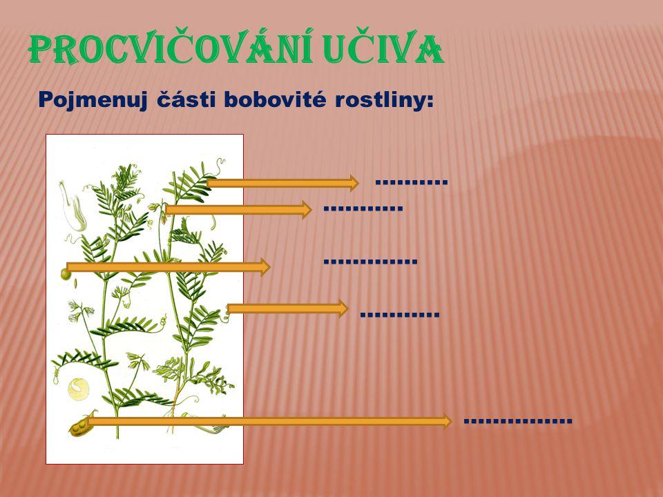 PROCVI Č OVÁnÍ U Č IVA Pojmenuj části bobovité rostliny: …….... ……….. …………. ……….. ……………