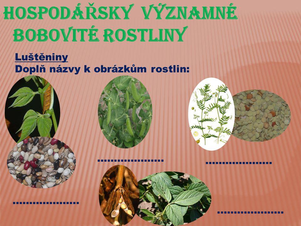 Hospodá Ř sky významné bobovité rostliny Luštěniny Doplň názvy k obrázkům rostlin: ………………..