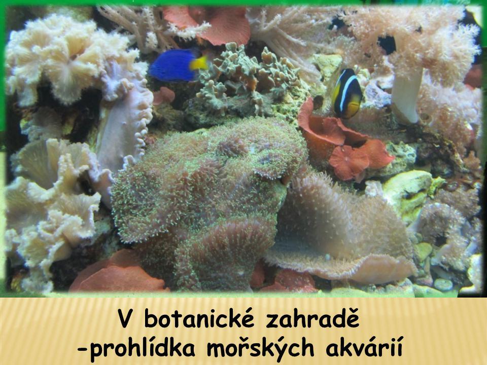 V botanické zahradě -prohlídka mořských akvárií