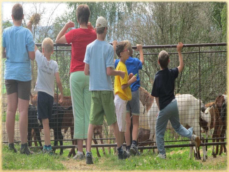 → Směr kozí farma