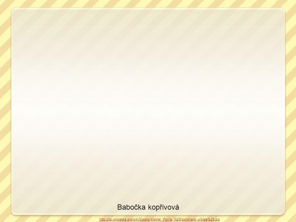 Babočka kopřivová http://cs.wikipedia.org/wiki/Soubor:Kleiner_Fuchs_%28Nymphalis_urticae%29.jpg