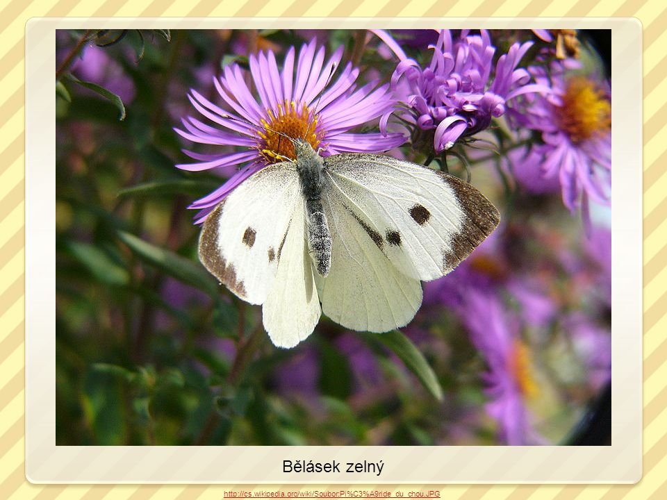 Modrásek http://commons.wikimedia.org/wiki/File:Butterfly_Luc_Viatour.JPG