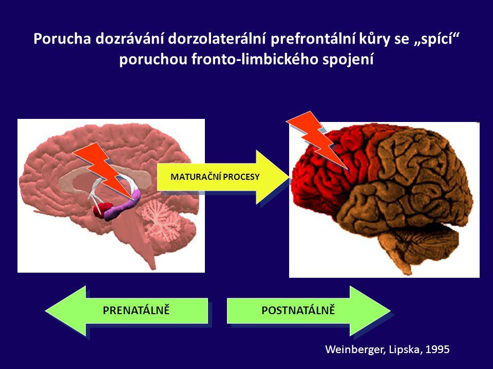"""PRENATÁLNĚ POSTNATÁLNĚ Porucha dozrávání dorzolaterální prefrontální kůry se """"spící"""" poruchou fronto-limbického spojení MATURAČNÍ PROCESY Weinberger,"""