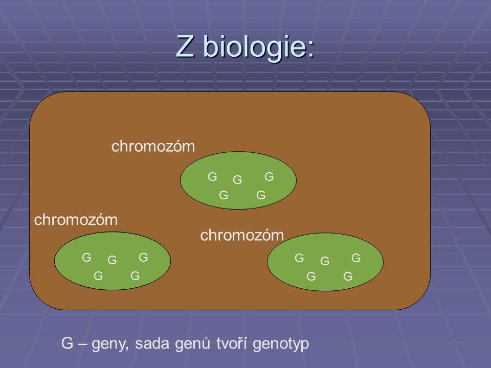 Z biologie: G G G G G G chromozóm G G G G G G G G G G G G G G G – geny, sada genů tvoří genotyp