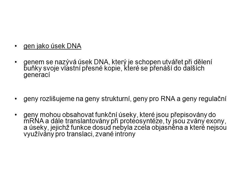 gen jako úsek DNA genem se nazývá úsek DNA, který je schopen utvářet při dělení buňky svoje vlastní přesné kopie, které se přenáší do dalších generací