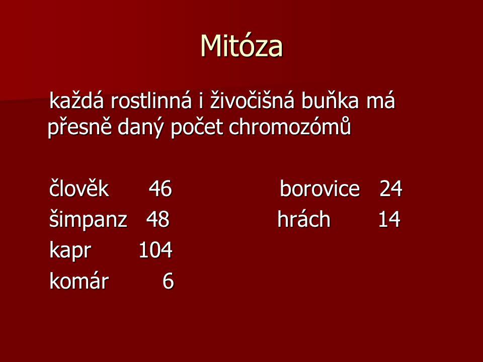 Mitóza v tělních (somatických) v tělních (somatických) buňkách je plný počet buňkách je plný počet chromozómů chromozómů diploidní sada 2n diploidní sada 2n u člověka 46 u člověka 46 v pohlavních buňkách v pohlavních buňkách (gametách) je poloviční (gametách) je poloviční počet chromozómu počet chromozómu haploidní sada n haploidní sada n 23 23