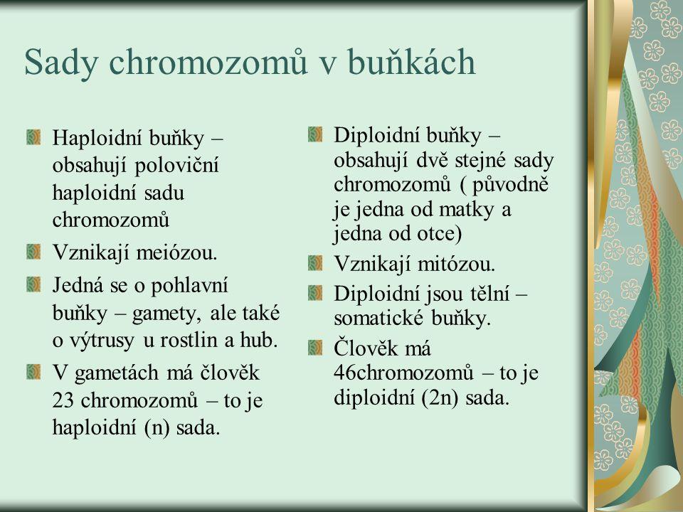 Sady chromozomů v buňkách Haploidní buňky – obsahují poloviční haploidní sadu chromozomů Vznikají meiózou. Jedná se o pohlavní buňky – gamety, ale tak