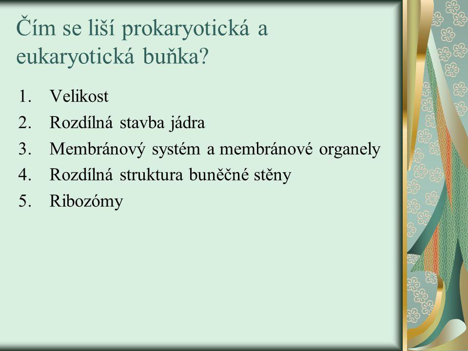 Čím se liší prokaryotická a eukaryotická buňka? 1.Velikost 2.Rozdílná stavba jádra 3.Membránový systém a membránové organely 4.Rozdílná struktura buně