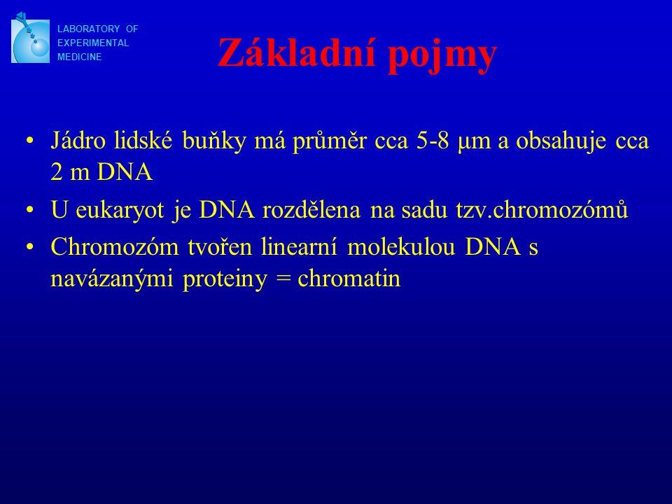 """Základní pojmy Nukleosom = Základní jednotkou komdenzace chromatinu Jádro nukleosomu tvořeno komplexem 8 histonů (H2A, H2B, H3, H4) kolem kterých je obtočena dvouřetězcová DNA (o délce asi 146 nukleotidových párů) DNA (průměrně 50 nukleotid.párů) spojuje sousední jádra nukleosomu = """"řetízek s korálky Pomocí histonu H1 spojeny 2 sousední nukleozomy = 30nm vlákno Chromatin: - rozvolněný - možná exprese genů, replikace - kondenzovaný - např.v mitóze Nejvíce kondenzovaná forma chromatinu = heterochromatin Chromatin rozvolněný až v různém stupni kondenzace = euchromatin LABORATORY OF EXPERIMENTAL MEDICINE"""