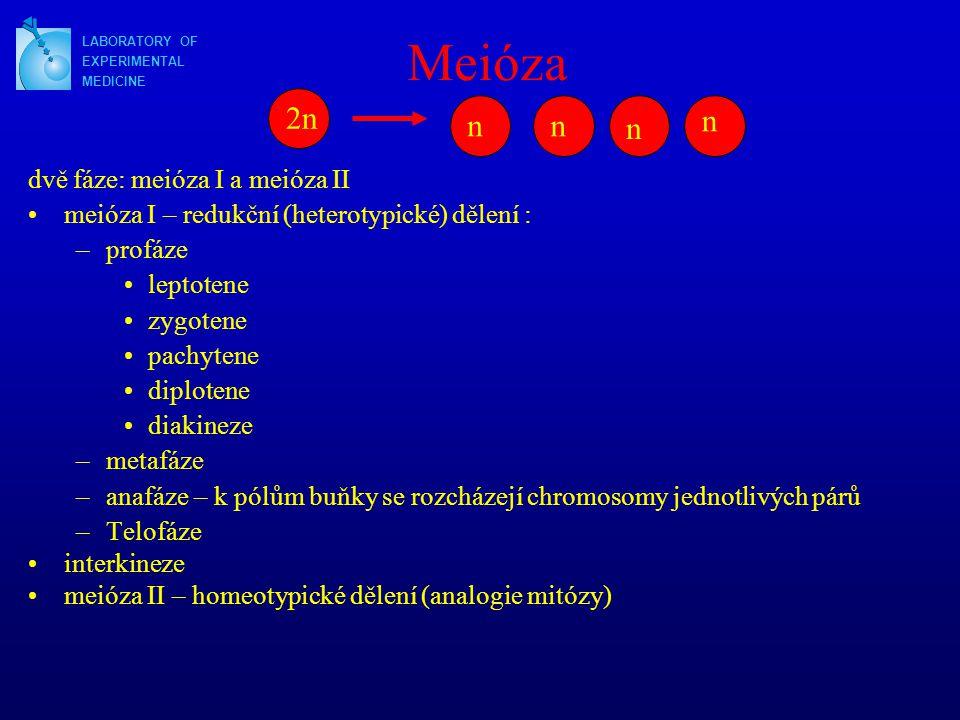 Meióza dvě fáze: meióza I a meióza II meióza I – redukční (heterotypické) dělení : –profáze leptotene zygotene pachytene diplotene diakineze –metafáze –anafáze – k pólům buňky se rozcházejí chromosomy jednotlivých párů –Telofáze interkineze meióza II – homeotypické dělení (analogie mitózy) LABORATORY OF EXPERIMENTAL MEDICINE 2n nn n n