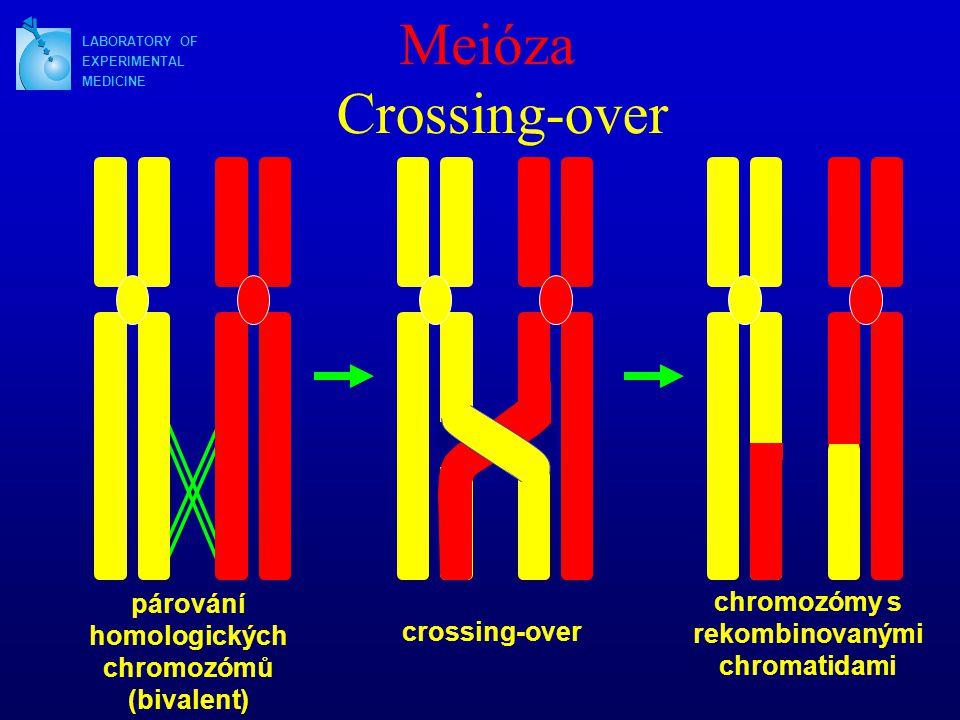 LABORATORY OF EXPERIMENTAL MEDICINE Meióza párování homologických chromozómů (bivalent) crossing-over chromozómy s rekombinovanými chromatidami Crossing-over