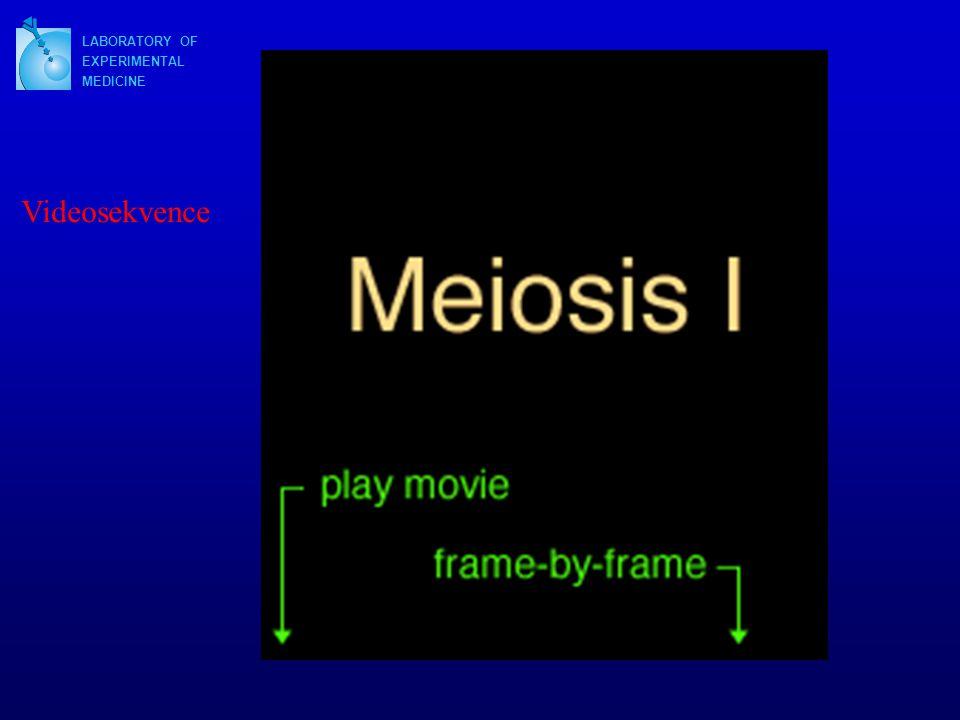 LABORATORY OF EXPERIMENTAL MEDICINE Videosekvence