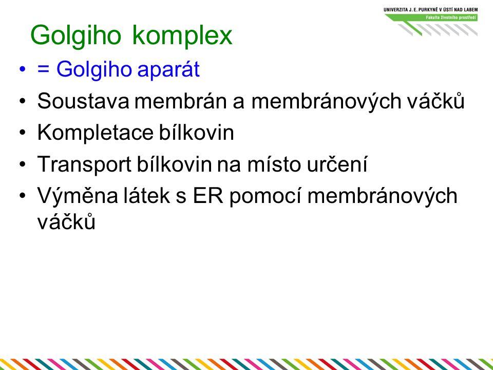 Golgiho komplex = Golgiho aparát Soustava membrán a membránových váčků Kompletace bílkovin Transport bílkovin na místo určení Výměna látek s ER pomocí