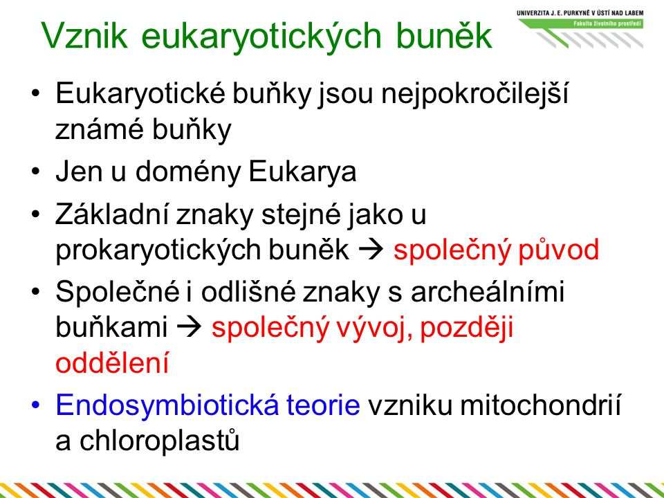 Vznik eukaryotických buněk Eukaryotické buňky jsou nejpokročilejší známé buňky Jen u domény Eukarya Základní znaky stejné jako u prokaryotických buněk