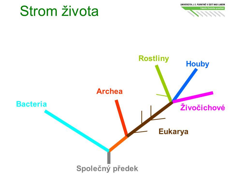 Strom života Společný předek Bacteria Archea Eukarya Rostliny Houby Živočichové