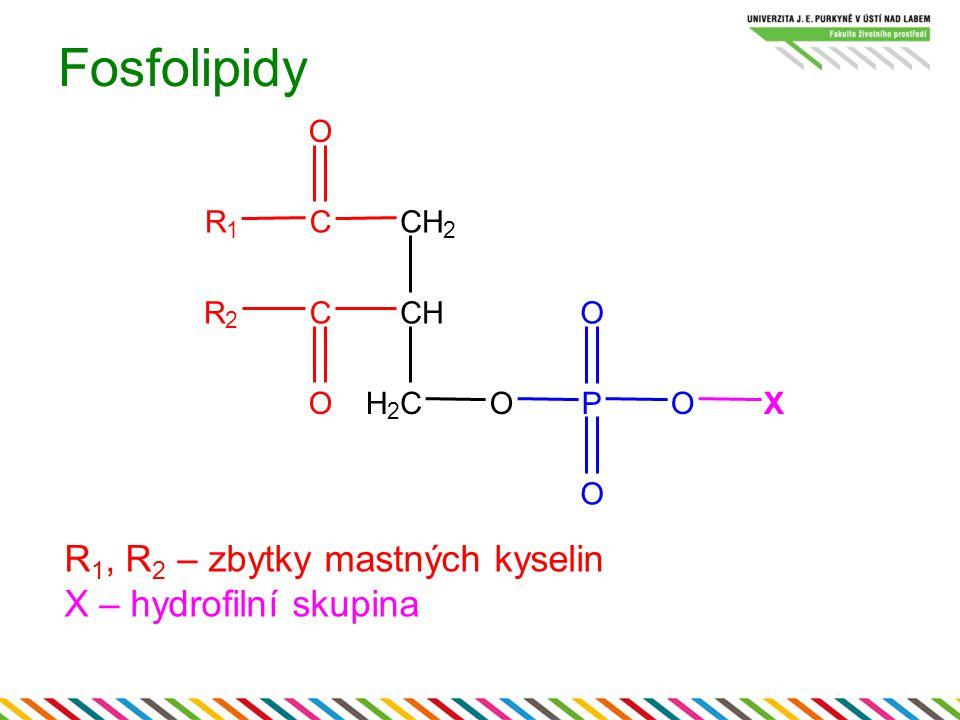 Fosfolipidy R 1, R 2 – zbytky mastných kyselin X – hydrofilní skupina CH 2 CH H 2 CO CR 1 O CR 2 OP O O O X
