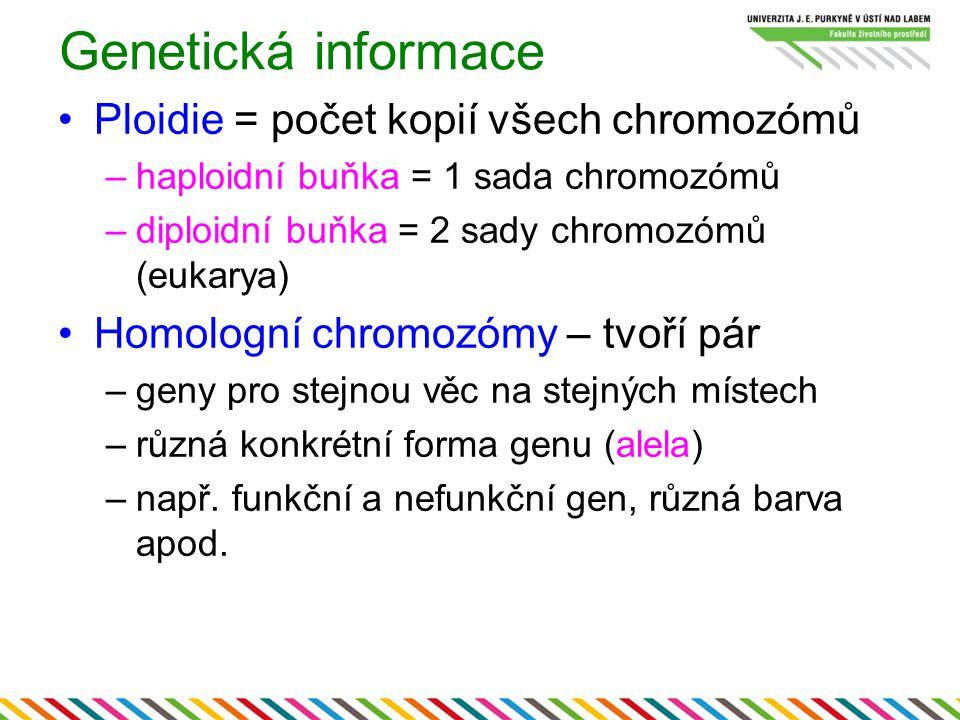 Genetická informace Ploidie = počet kopií všech chromozómů –haploidní buňka = 1 sada chromozómů –diploidní buňka = 2 sady chromozómů (eukarya) Homolog