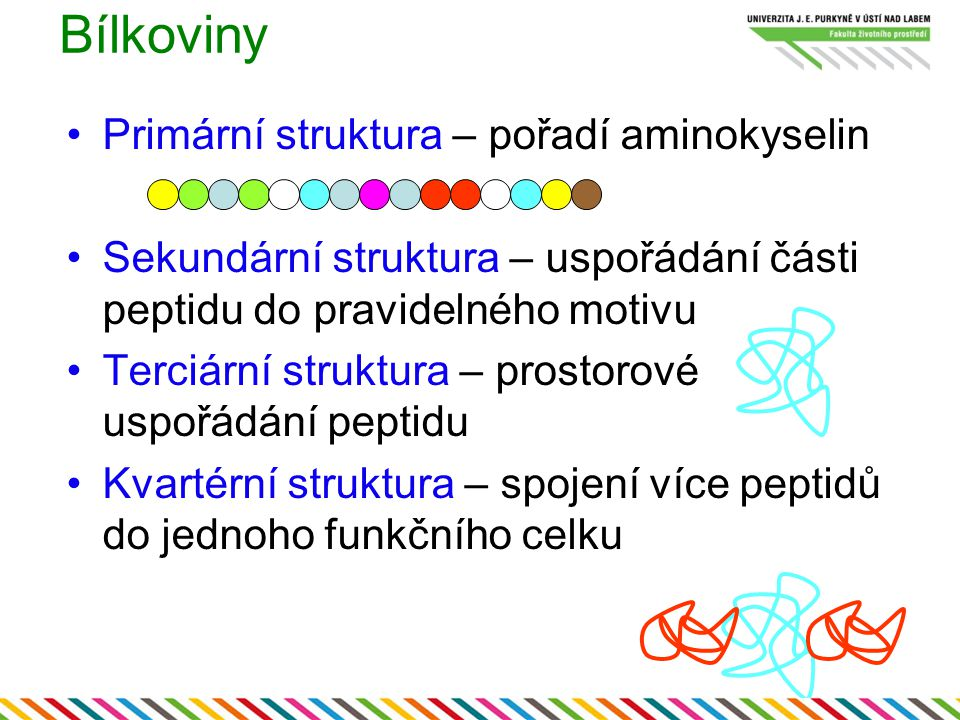 Primární struktura – pořadí aminokyselin Sekundární struktura – uspořádání části peptidu do pravidelného motivu Terciární struktura – prostorové uspoř